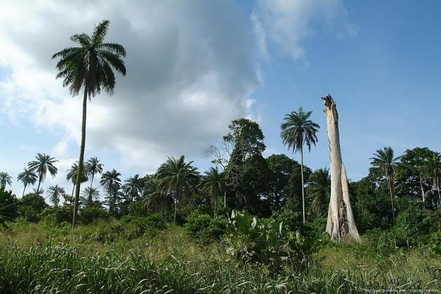 tree4